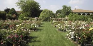 Per tre volte Giardinaria