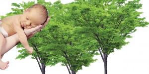 Giornata degli alberi. Un bosco in più per Cremona