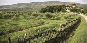 Albania: l'itinerario culturale degli ulivi
