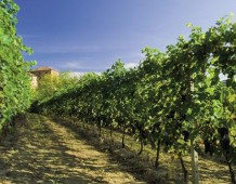 Le signore del vino nel Regno delle botti