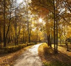 Cammina Foreste Urbane 2019