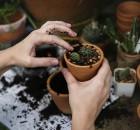 Ambiente e ricadute sulla salute