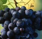 62ª Festa dell'Uva e dell'Agricoltura Bergamasca