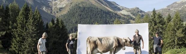 """""""Segni e Sogni d'Alpe"""""""