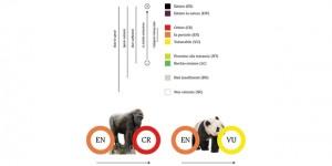 Panda fuori pericolo. Grandi scimmie a rischio estinzione