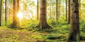 I benefici delle foreste ora sono certificabili