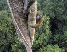 Wildlife Photographer of the Year: Fotografare per conservare la natura
