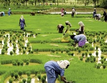 Kerala, oasi felice dell'India