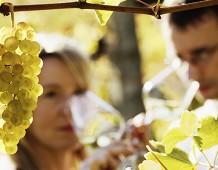Il Vino... amico della biodiversità