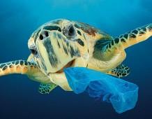 Plastica in mare: è emergenza planetaria. Wwf Italia lancia  una petizione per liberare i mari