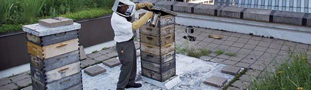 Cremona dalla parte delle api