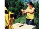 Vita da apicoltrice. Amore per le api e per il territorio