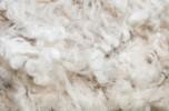 filiera della lana