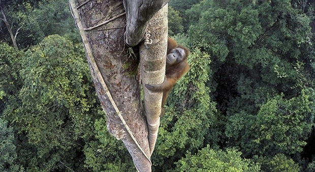 Wildlife Photographer of the Year: Fotografare per conservare la natura